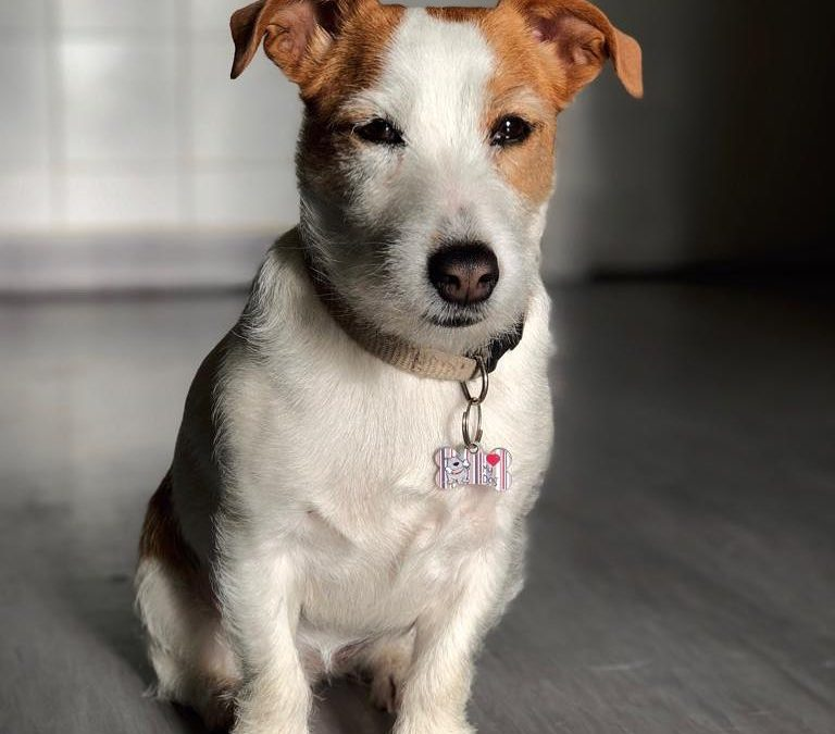 Perro Saga